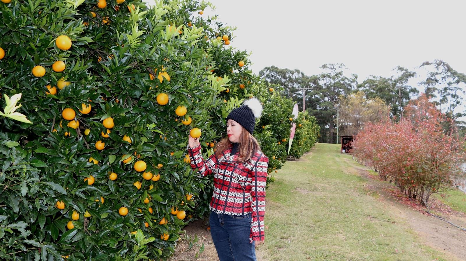 Orange Orchard
