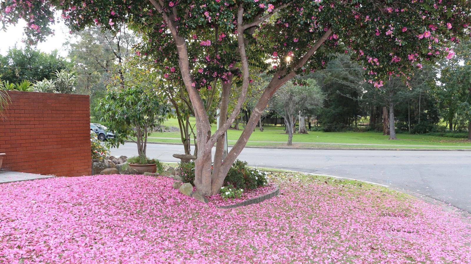 Pink Autumn flowers blog