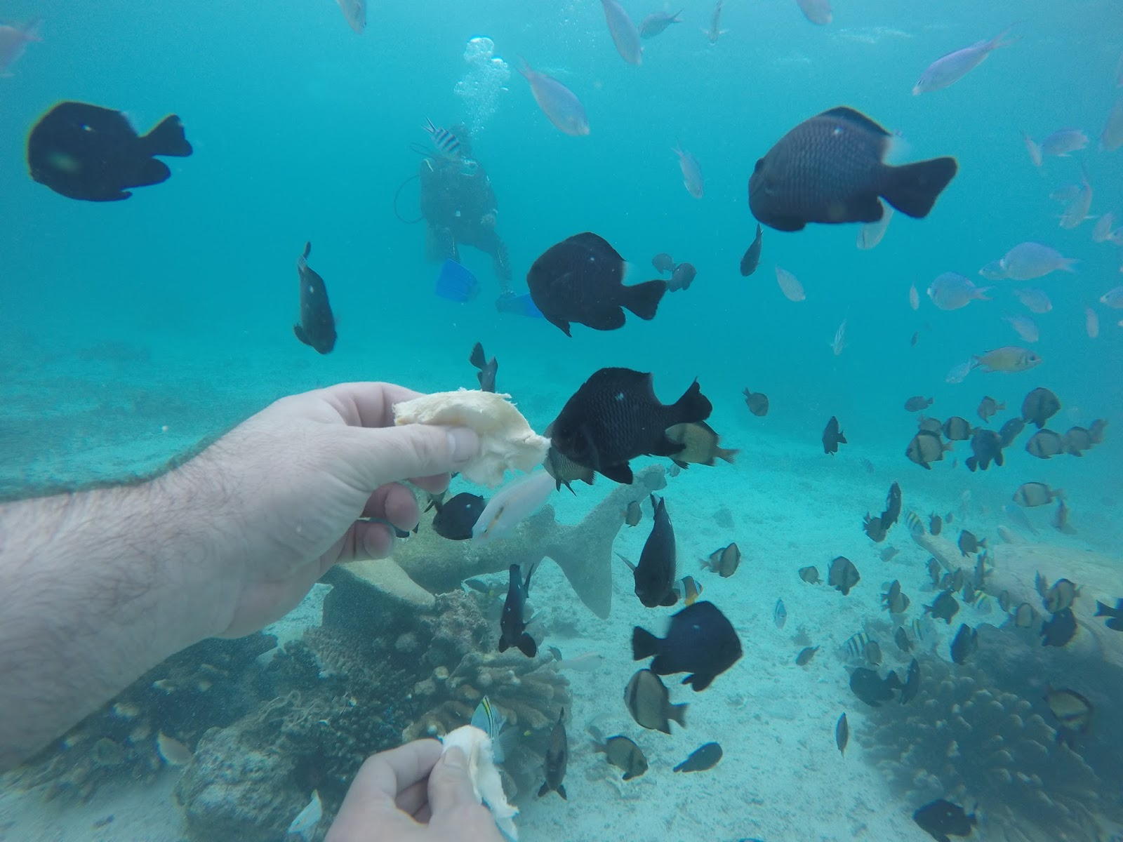 Boracay fish feeding