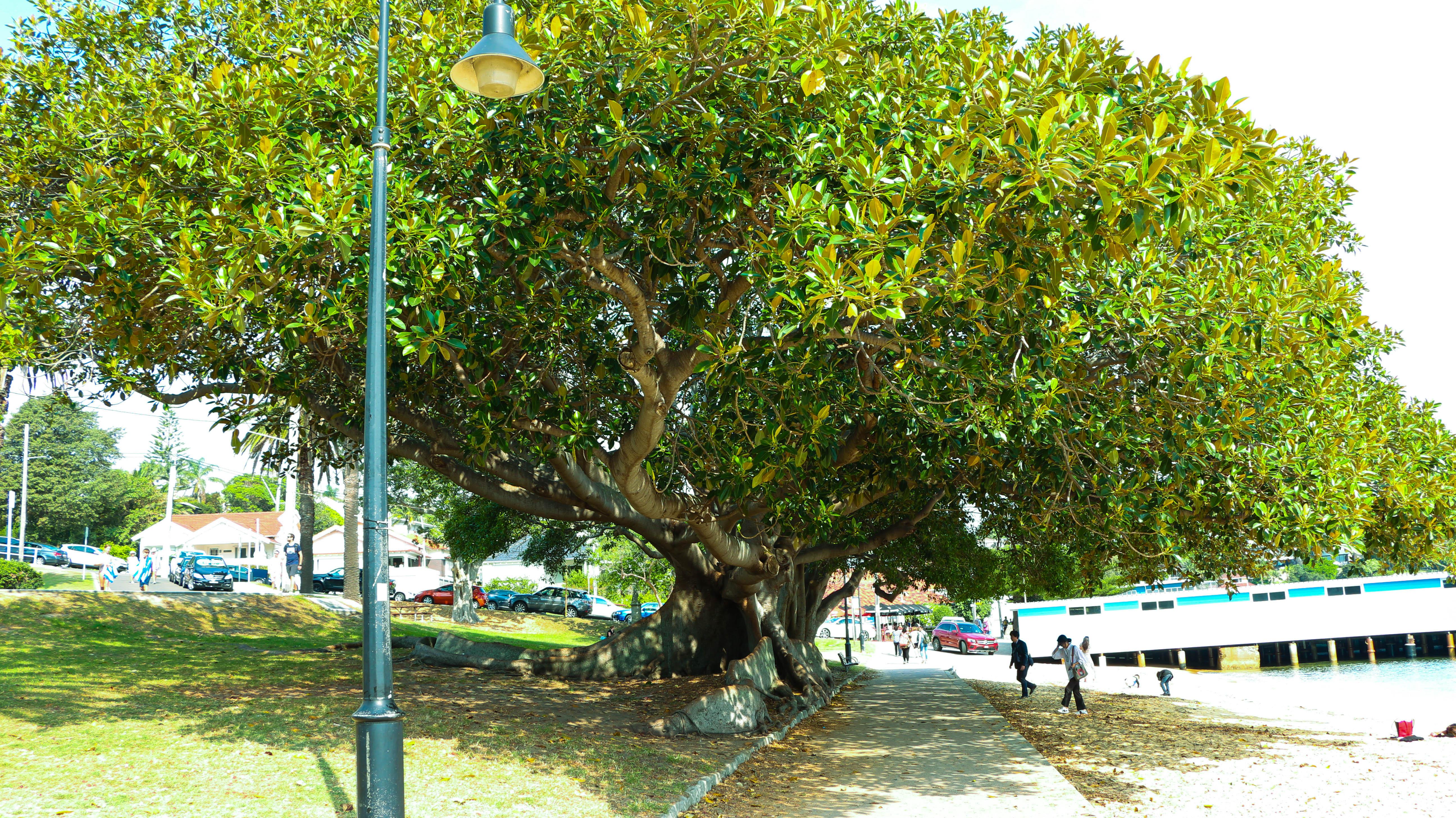 Dunbar House tree
