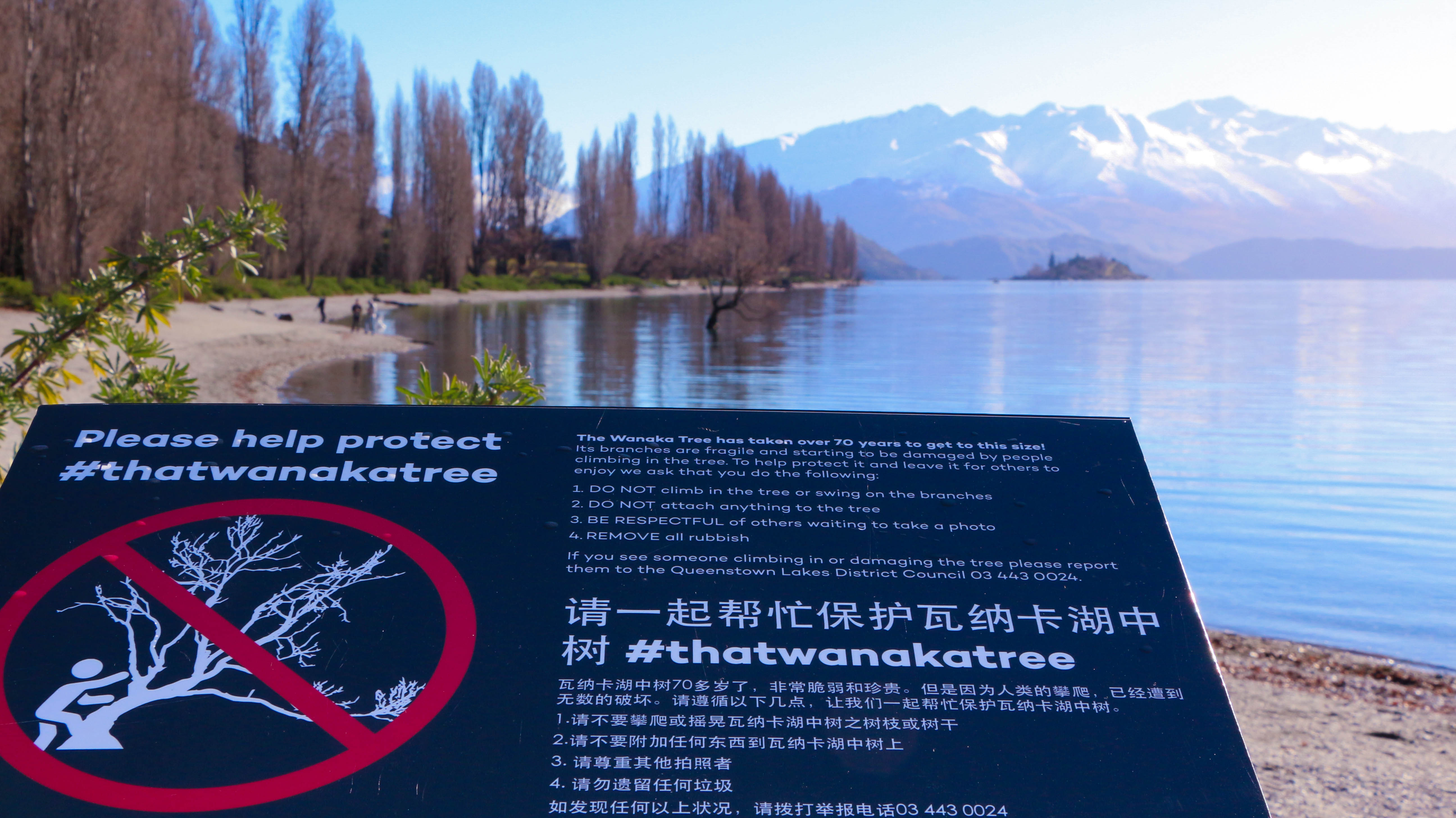 Protect Wanaka Tree sign