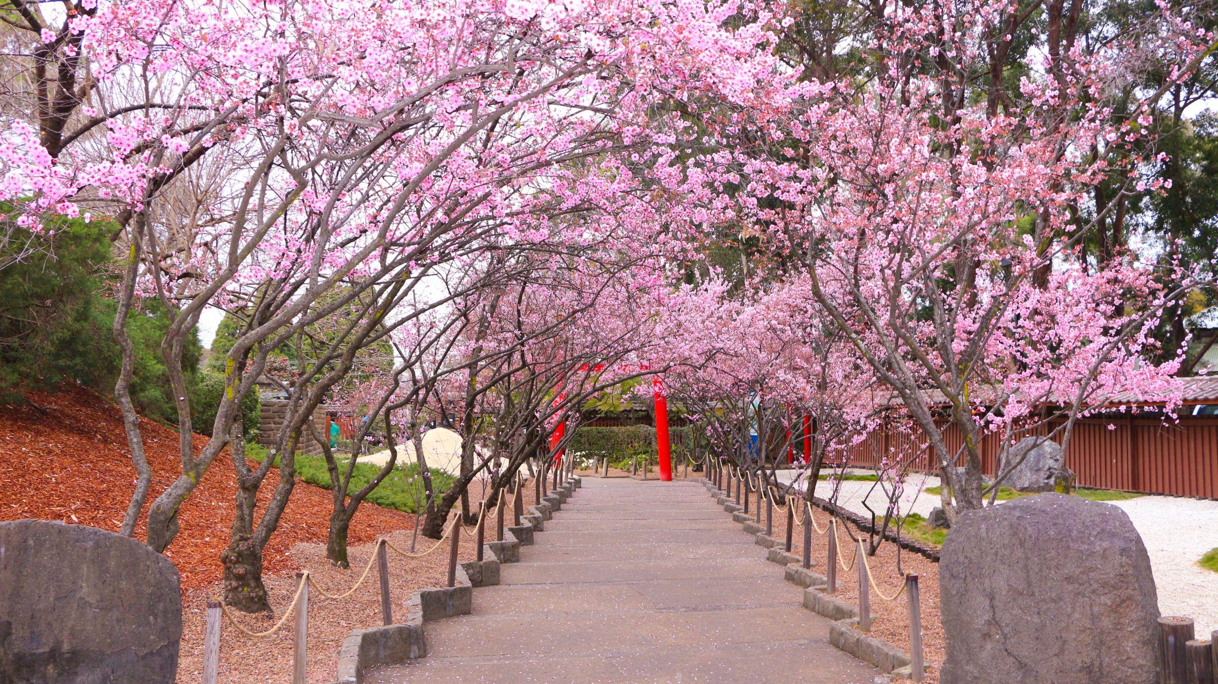 Auburn Botanic Gardens blog