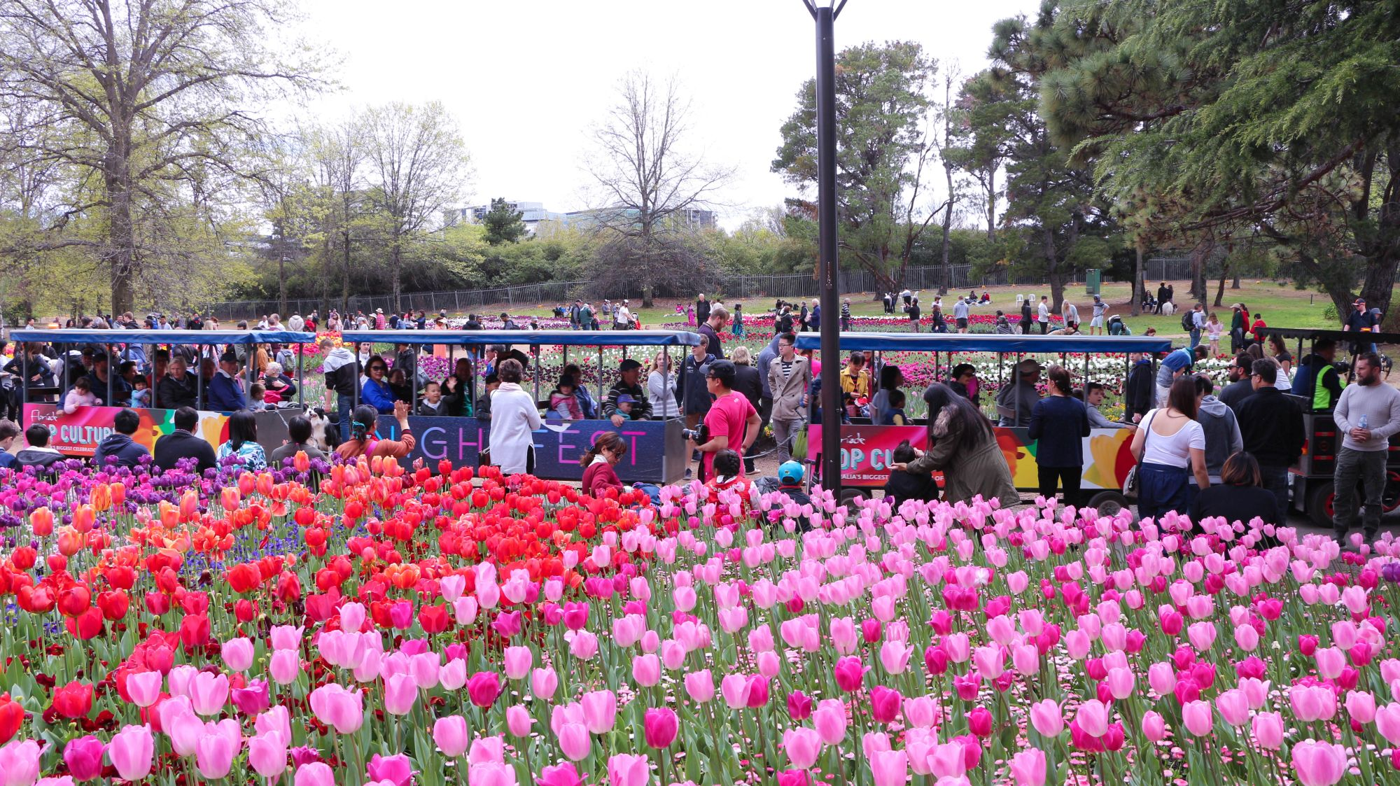Biggest floral festival in Southern Hemisphere