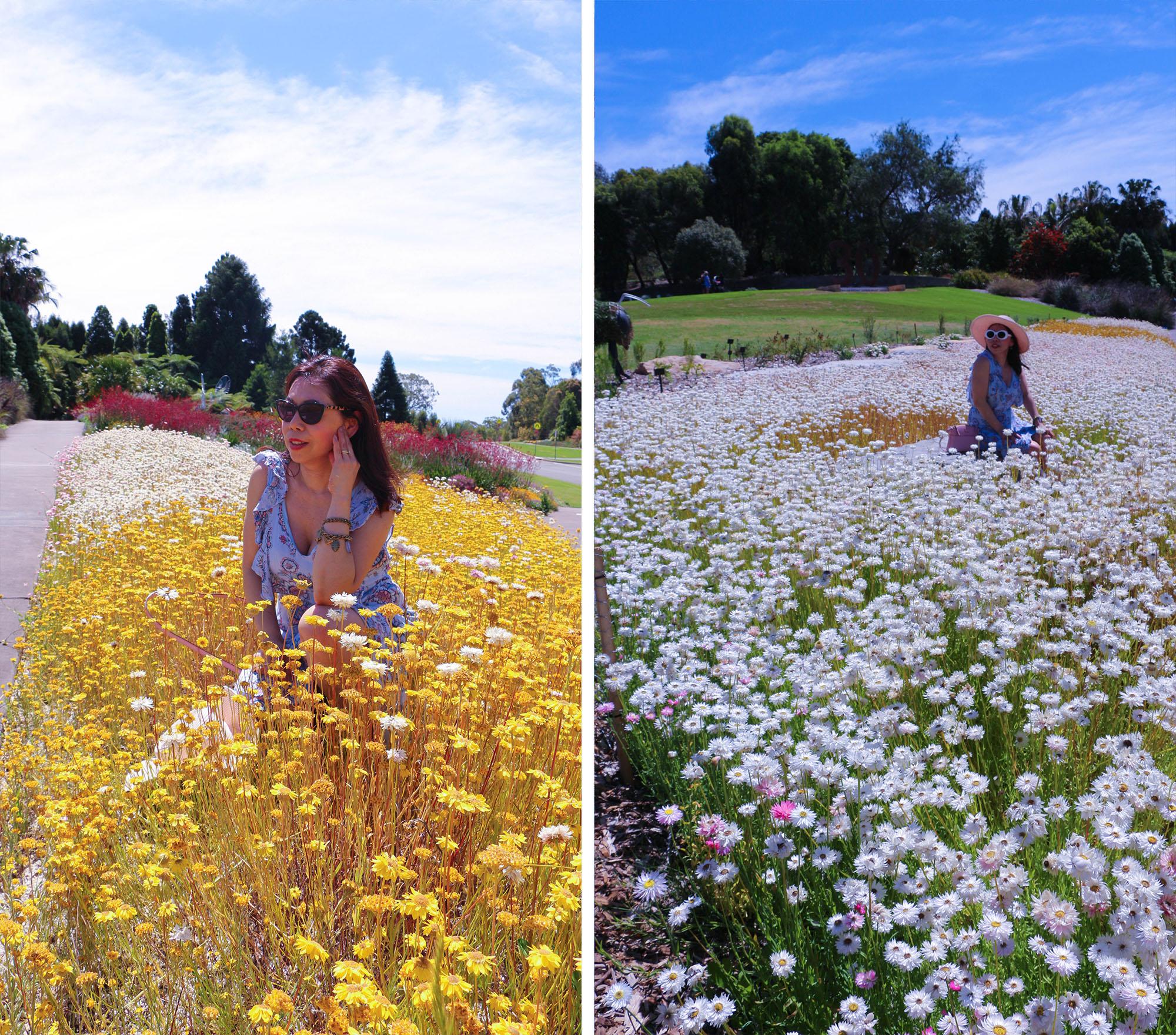 Everlasting Flowers blog