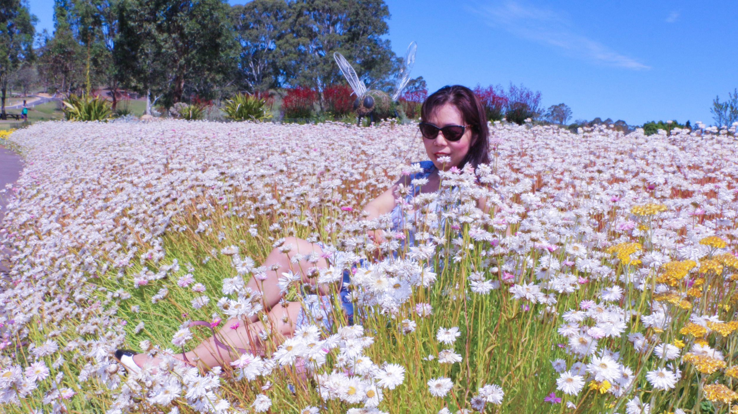 Paper daisies blog