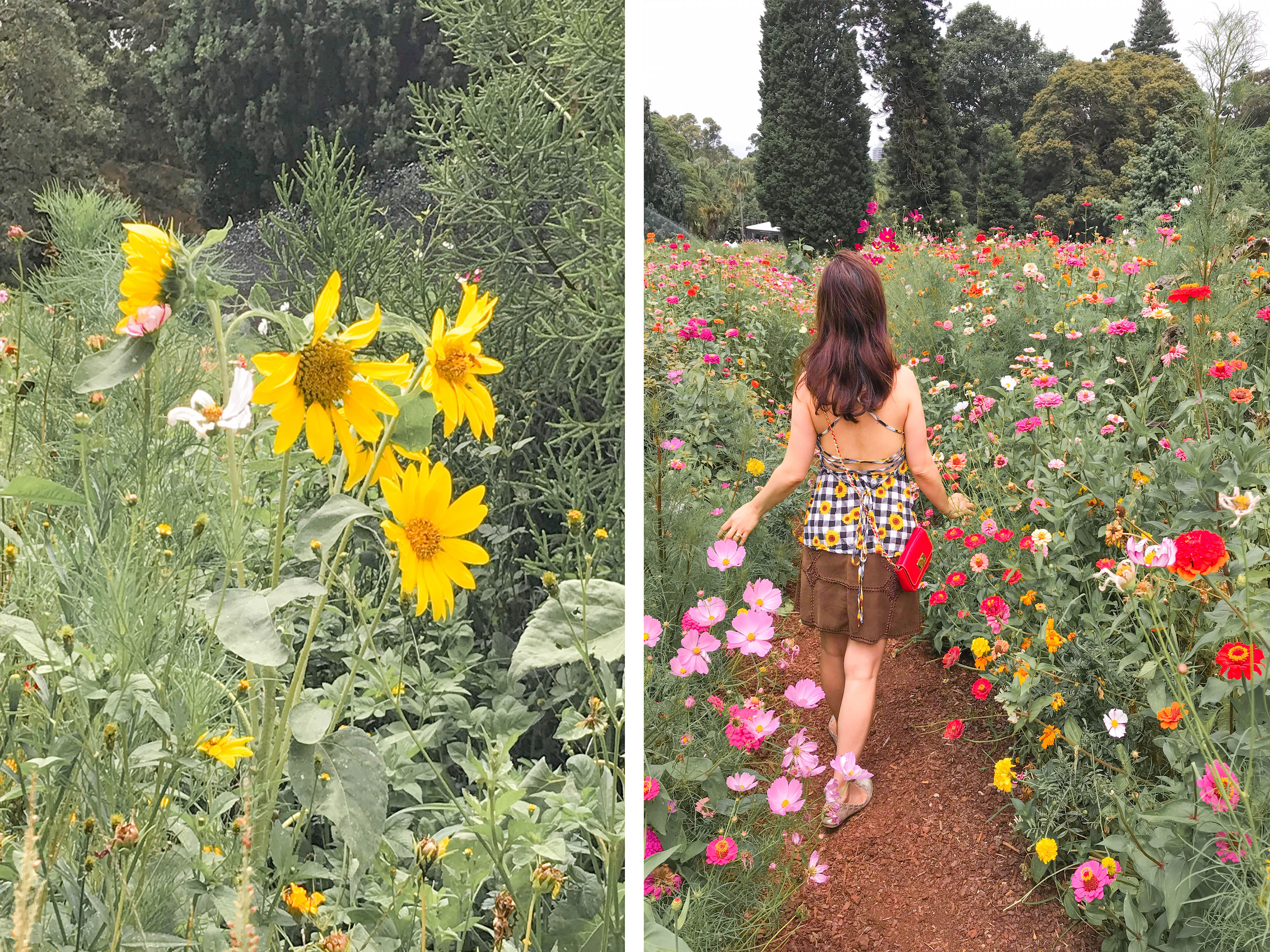 The Meadow Sydney Botanic Garden