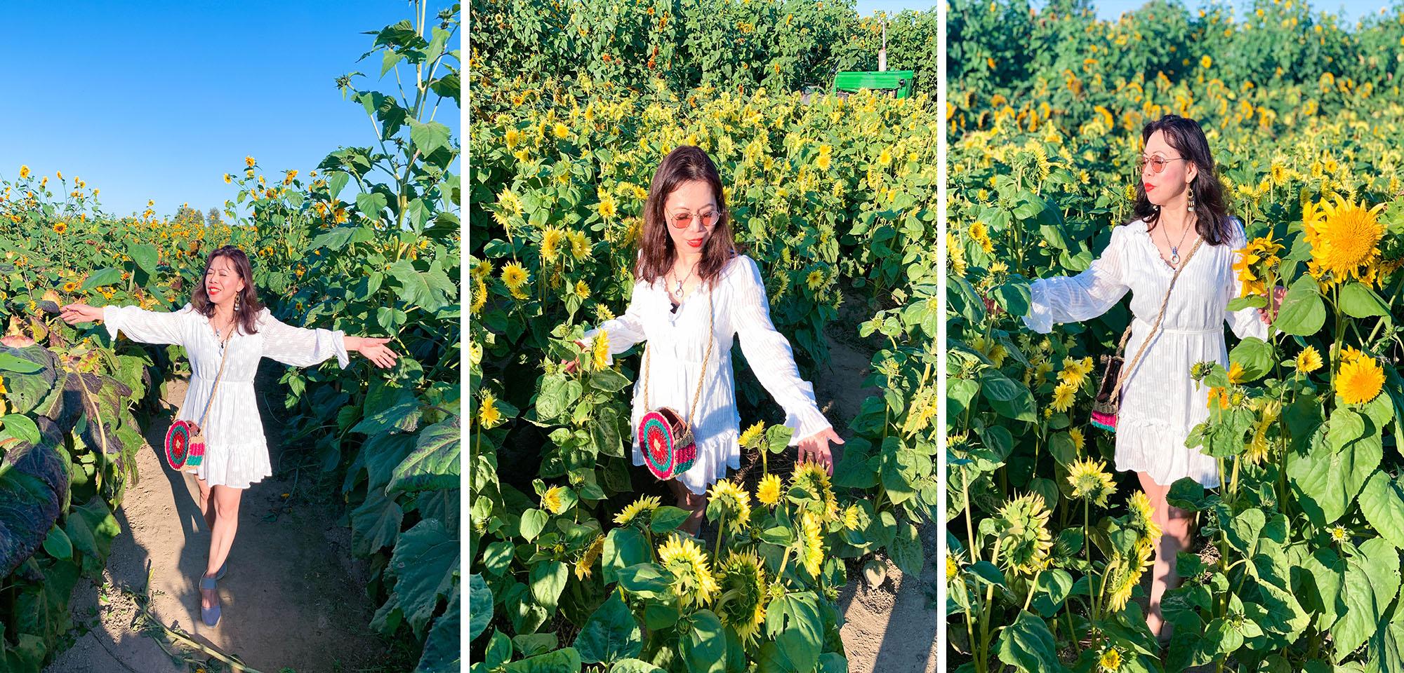 What to wear in Sunflower farm