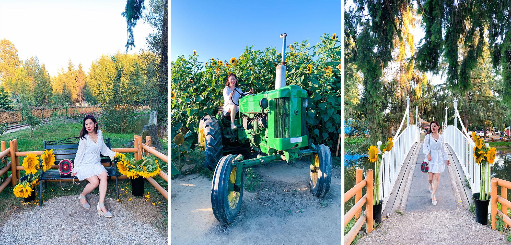 Sunflower Farm blog