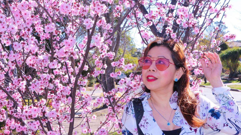 Cherry blossoms in Australia
