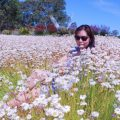 Paper daisies review